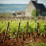 Vignes Puligny-Montrachet