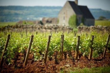 Visits and workshops table olivier leflaive - La table d olivier leflaive puligny montrachet ...