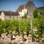 Les vignes Puligny-Montrachet